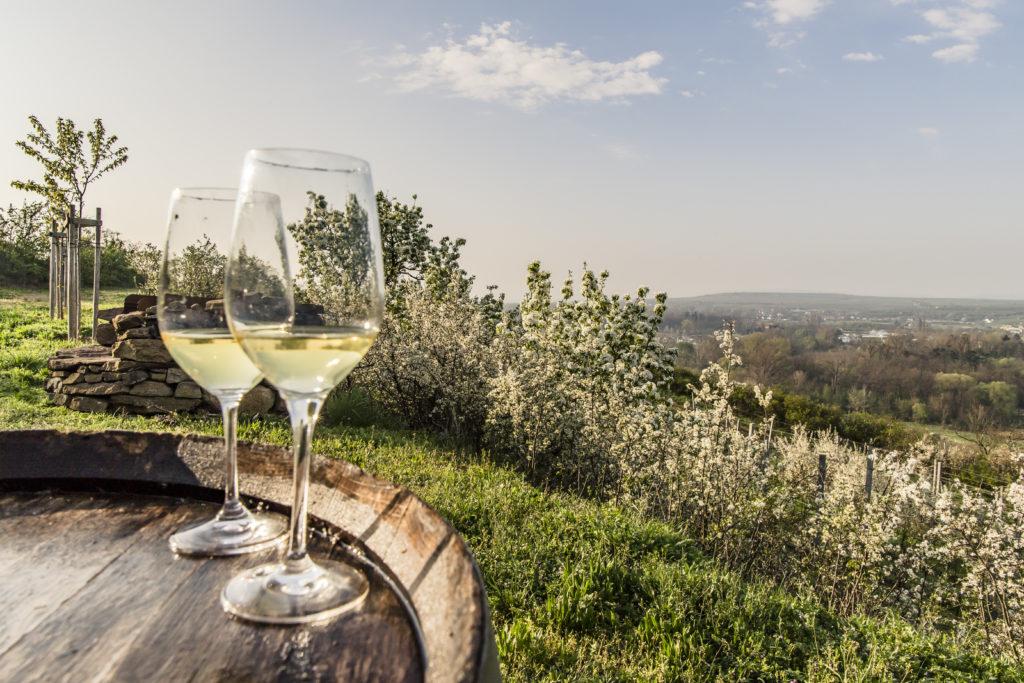 """Vydejte se za hranice ochutnat """"letošní"""" vína"""