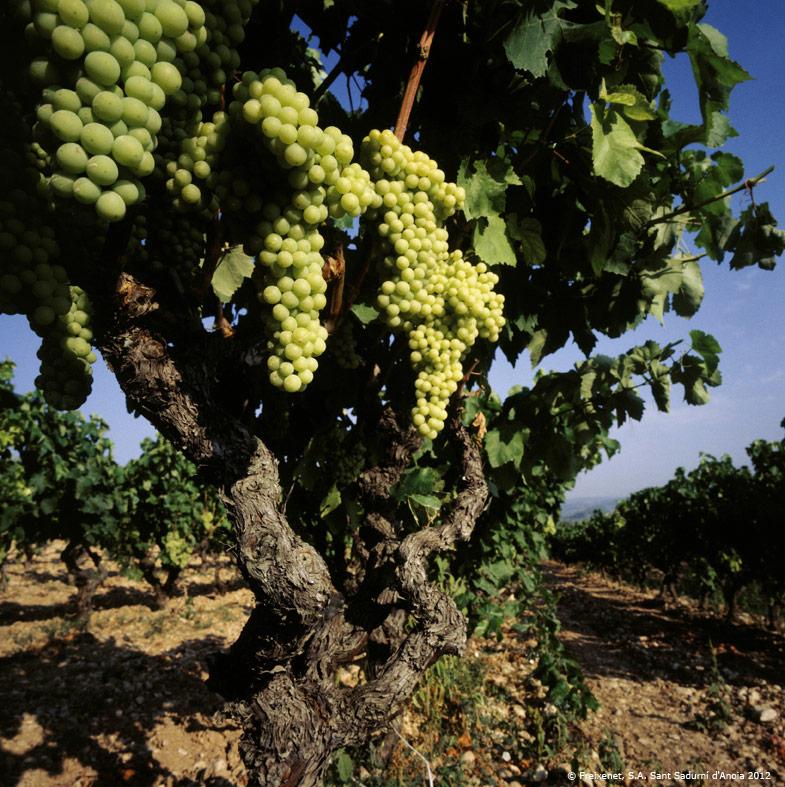 Vydejte se za poznáváním českých i zahraničních vinařských destinací