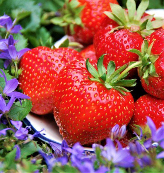 Sezóna českých jahod je v plném proudu! Na co si dávat při nákupu pozor?