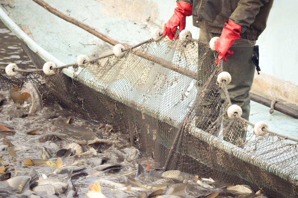 Čas výlovů rybníků se blíží, vydejte se za zážitkem i čerstvou rybou z našich vod