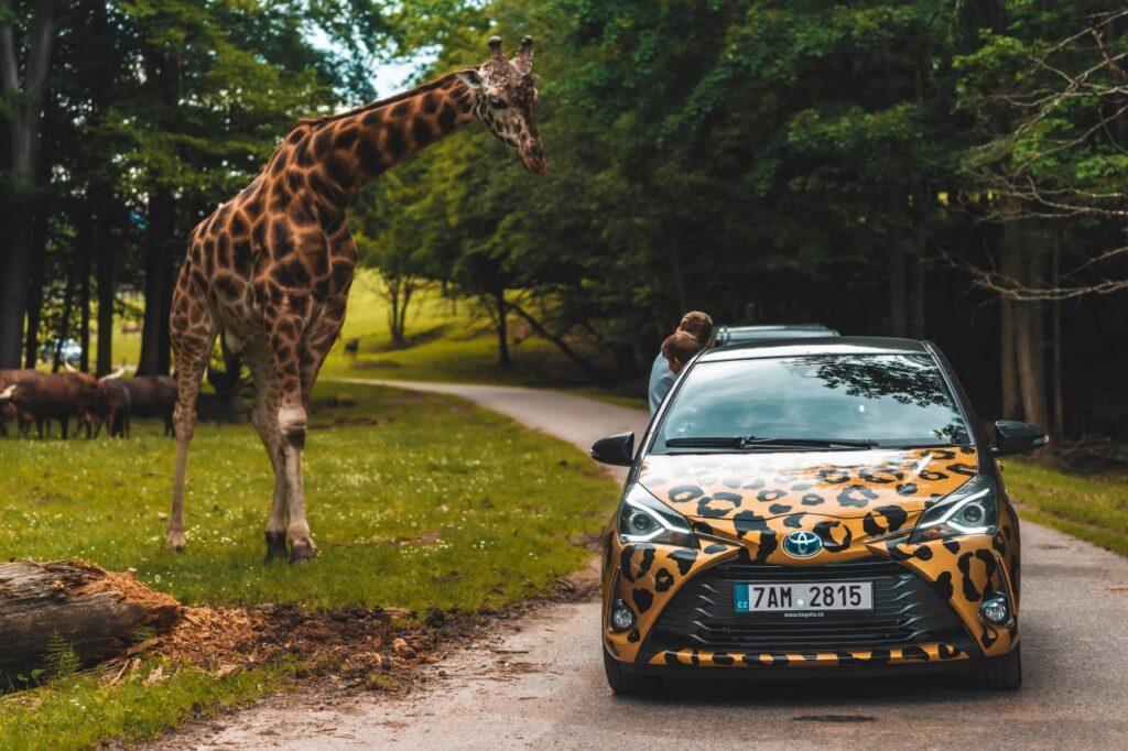 Skvělý tip na výlet s dětmi do Safari Parku Dvůr Králové