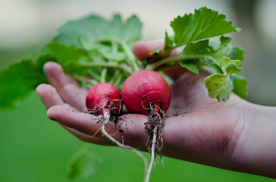 Drahá zelenina? Založte si užitkovou zahrádku a vypěstujte si vlastní zeleninu už letos