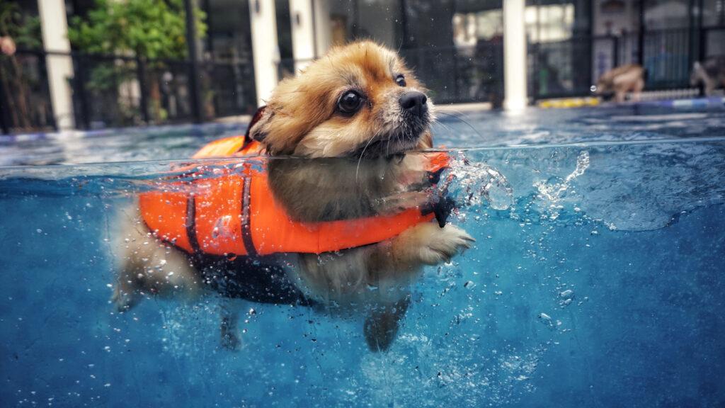 Odborník radí: jak naučit psa plavat