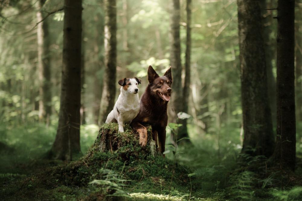 Veterinářka radí: Jak zbavit psa klíšťat a kdy je lepší zajít k veterináři