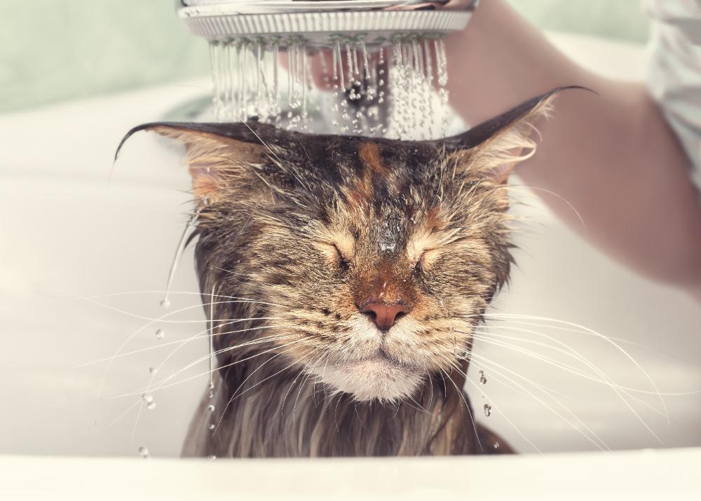 Veterinářka radí: Jak často koupat domácího mazlíčka?